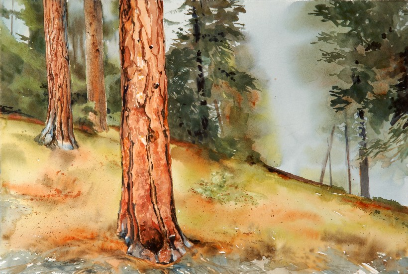 Eastern Forest, a Suze Woolf watercolor painting for the Nature Conservancy